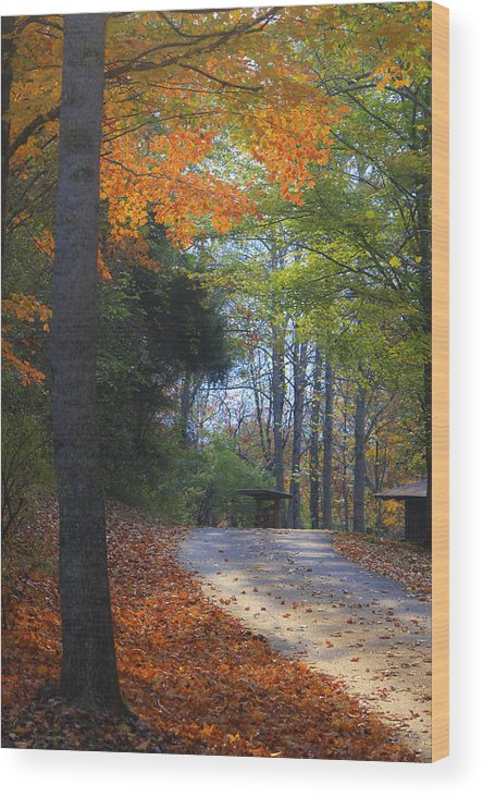 Cabin Wood Print featuring the photograph Road To Cabin 2 by Teresa Mucha
