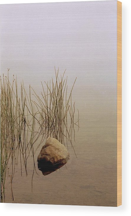 Calm Wood Print featuring the photograph Rock And Reeds On Foggy Morning by Roger Soule