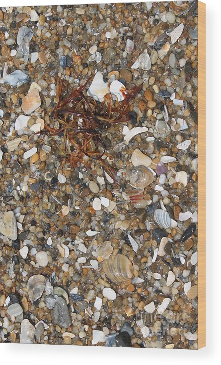 Beach Wood Print featuring the photograph Rusty Seaweed by Marcie Daniels