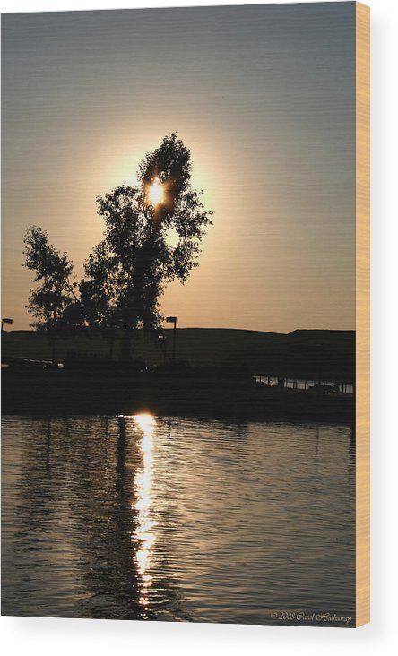Sunset Wood Print featuring the photograph Setting Sun At Cypress Hills by Carol Hathaway