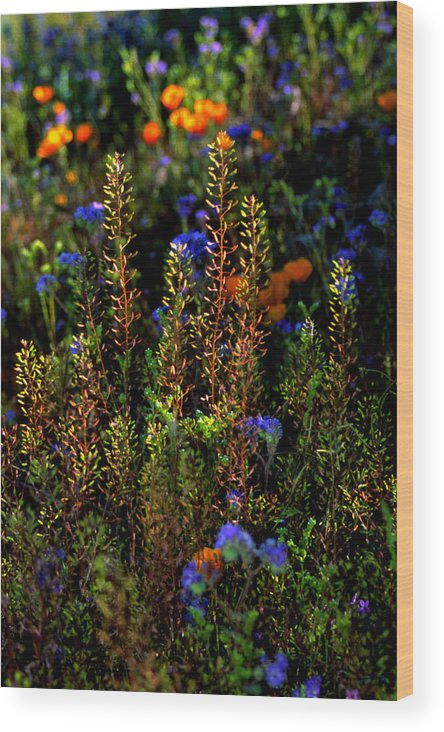 Flowers Wood Print featuring the photograph Shimmers by Randy Oberg