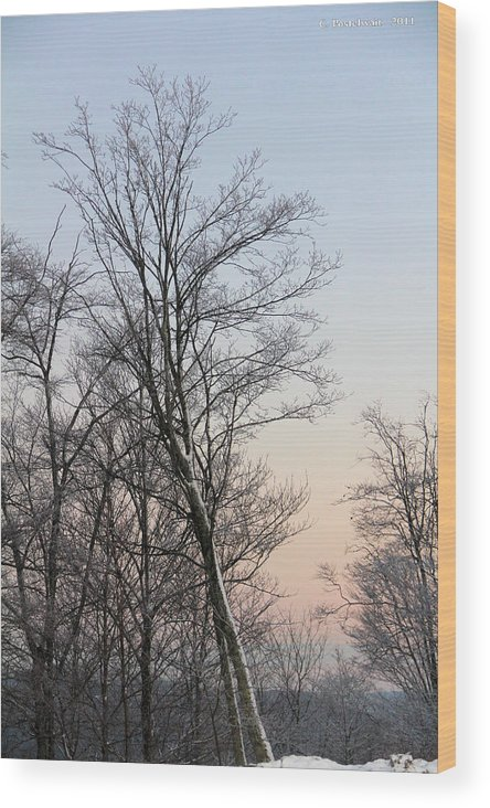 Snow Wood Print featuring the photograph Snow Scene by Carolyn Postelwait