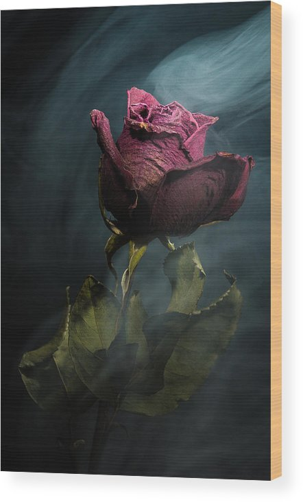 Rose Wood Print featuring the photograph Spirit Of A Dying Rose by Vincent Knaus