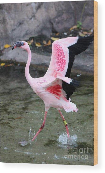 Flamingo Wood Print featuring the photograph Spread Them by Mesa Teresita