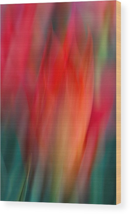 Tulip Wood Print featuring the photograph Spring Fling by Neil Shapiro