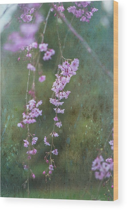 Spring Wood Print featuring the photograph Spring Is Weeping by John Rivera
