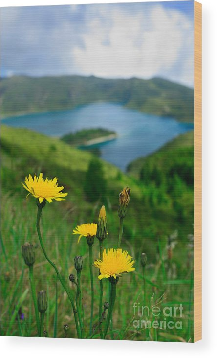 Caldera Wood Print featuring the photograph Springtime In Fogo Crater by Gaspar Avila