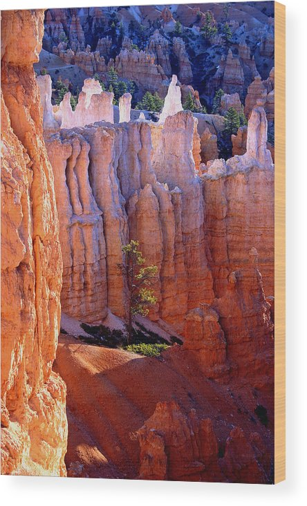 Bryce Canyon Wood Print featuring the photograph Sticks And Stones by Brian M Lumley