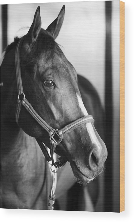 Horse Wood Print featuring the photograph Horse And Stillness by Marilyn Hunt