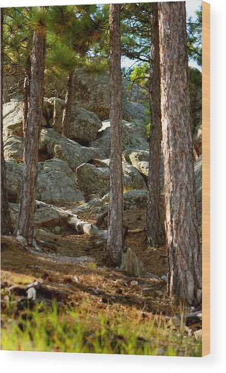 Attraction Wood Print featuring the photograph Stones And Trees by Mike Oistad