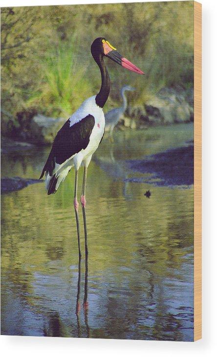 Bird Wood Print featuring the photograph Suedana by Desenclos Patrick