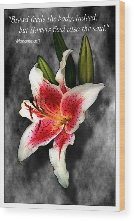 Quote Wood Print featuring the photograph Sun Gazer Lily Poster by Roger Soule
