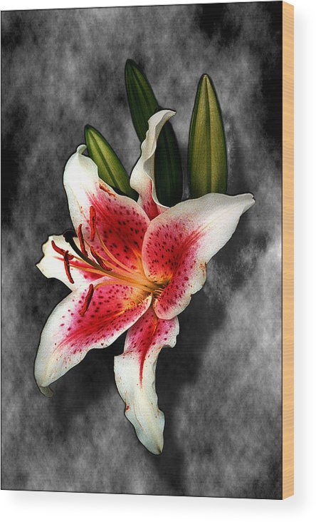 Flower Wood Print featuring the photograph Sun Gazer Lily by Roger Soule