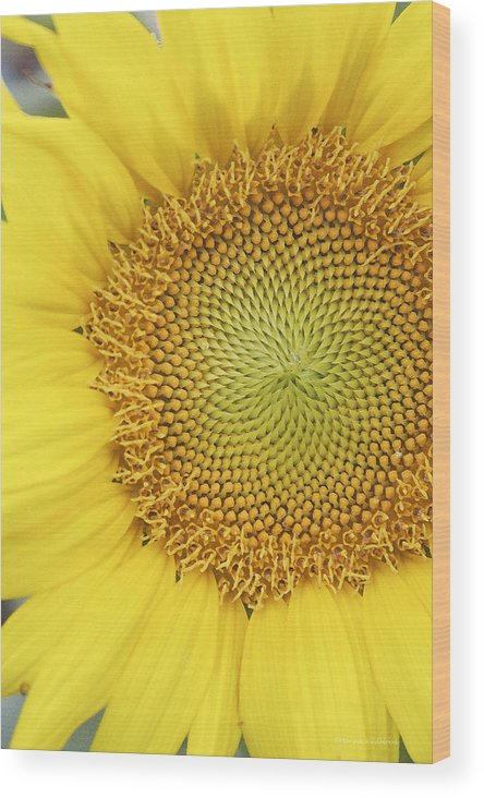 Sunflower Wood Print featuring the photograph Sunflower by Margie Wildblood
