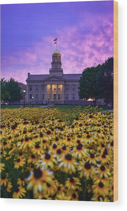 Iowa Wood Print featuring the photograph Sunflowers At The Old Capitol by Ben Ford