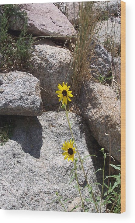 Scenic Veiw Wood Print featuring the photograph Sunny Side Of Life by Sarah Bauer