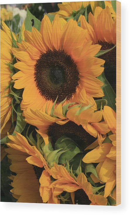 Flowers Wood Print featuring the photograph Suns And Brothers by Alan Rutherford