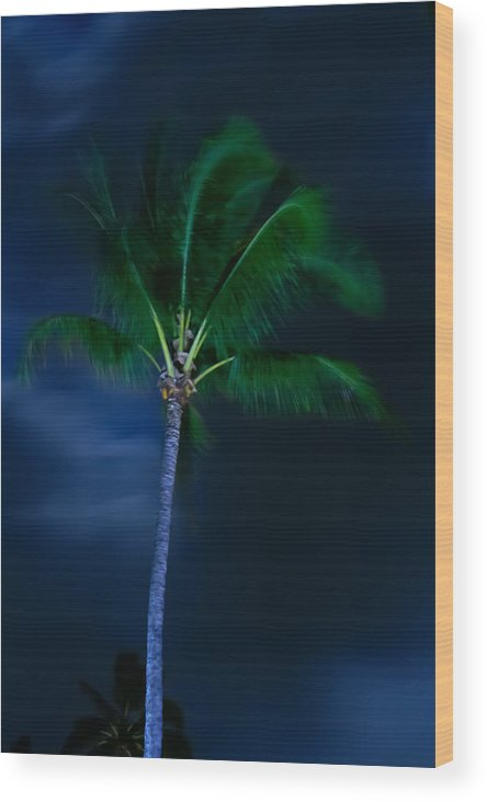 Palm Trees Wood Print featuring the photograph Swaying Palm Tree by Roger Mullenhour