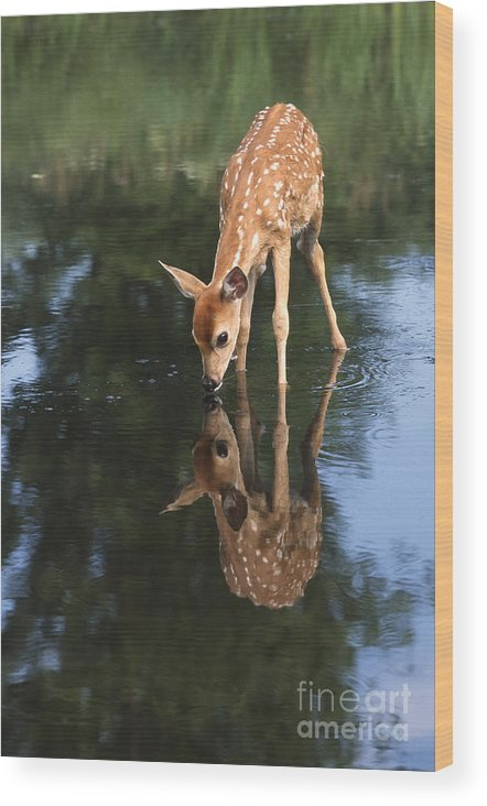 Deer Wood Print featuring the photograph That Must Be Me by Sandra Bronstein