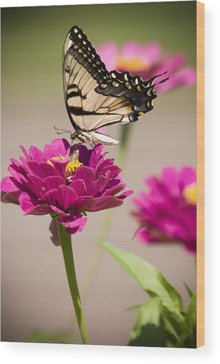 Butterfly Wood Print featuring the photograph The Flower And Butterfly by Chad Davis