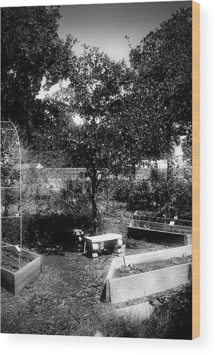 Dark Photos Wood Print featuring the photograph The Garden by Jennifer DeMoss