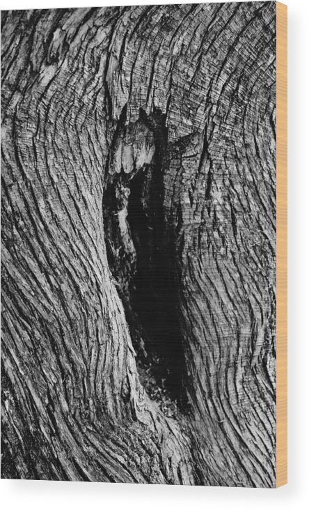 Tree Wood Print featuring the photograph The Hermit In The Woods by Daniel Thompson