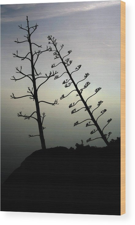Branch Wood Print featuring the photograph The Lonely Couple by Jason Hochman