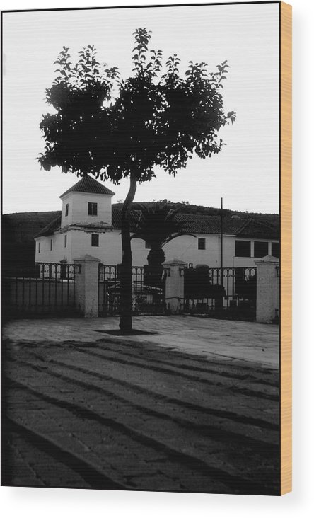 Photographer Wood Print featuring the photograph The Square Tree by Jez C Self