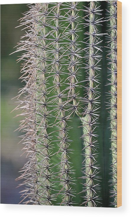 Arizona Wood Print featuring the photograph Thorny Cactus by Tom Dowd