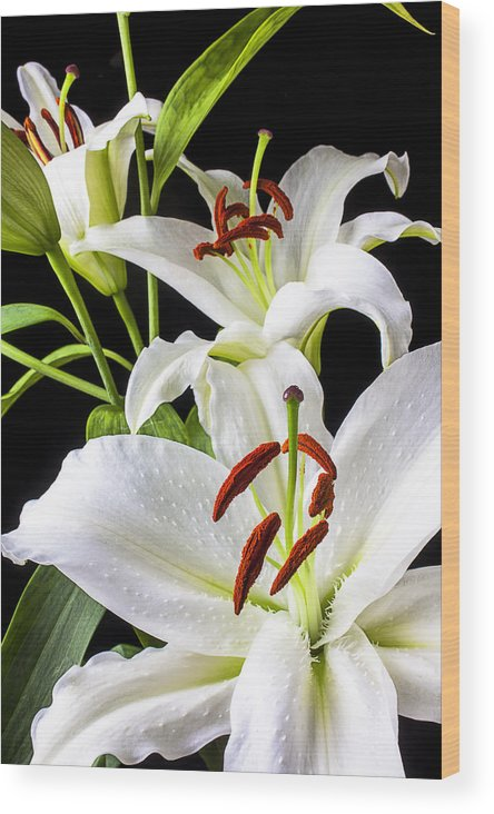 White Tiger Lily Wood Print featuring the photograph Three White Lilies by Garry Gay