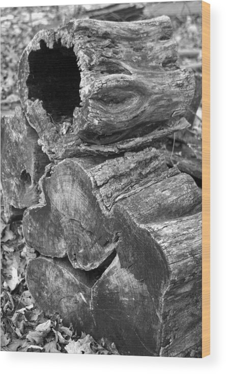 Wood Print featuring the photograph Threelogs by Curtis J Neeley Jr