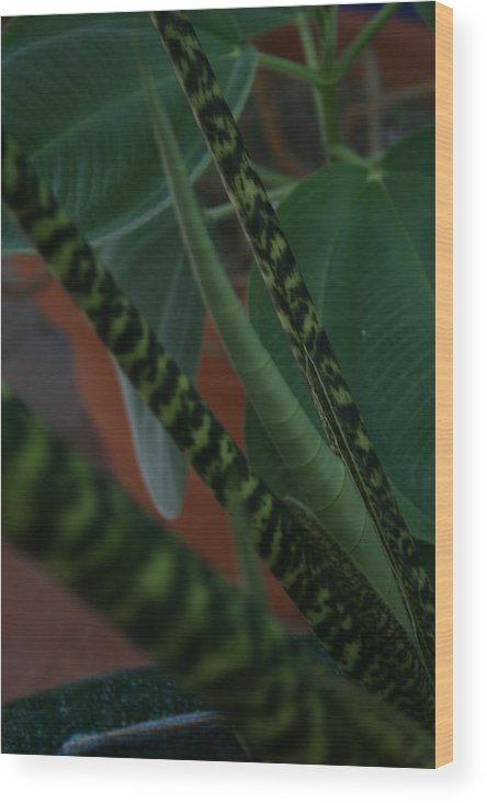 Botanical Wood Print featuring the photograph Tiger Plant II by Allan E Dooley Jr