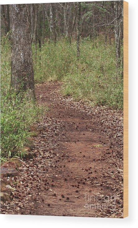 Walking Trail Photographs Wood Print featuring the photograph Trail To Beauty by Kim Henderson