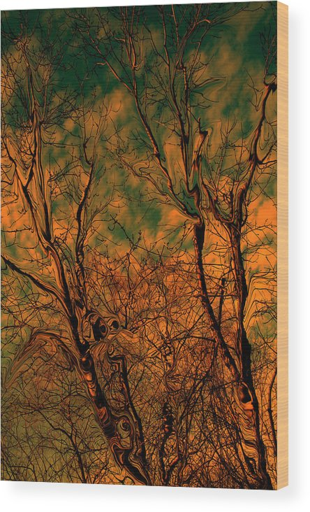 Trees Wood Print featuring the photograph Tree Abstract by Linda Sannuti