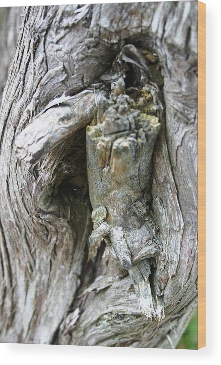 Tree Wood Print featuring the photograph Tree Knot by Joni Strickfaden