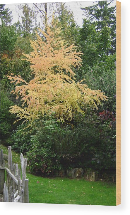 Katsura Wood Print featuring the photograph Tree Of Tranquility. by Laura Johnson