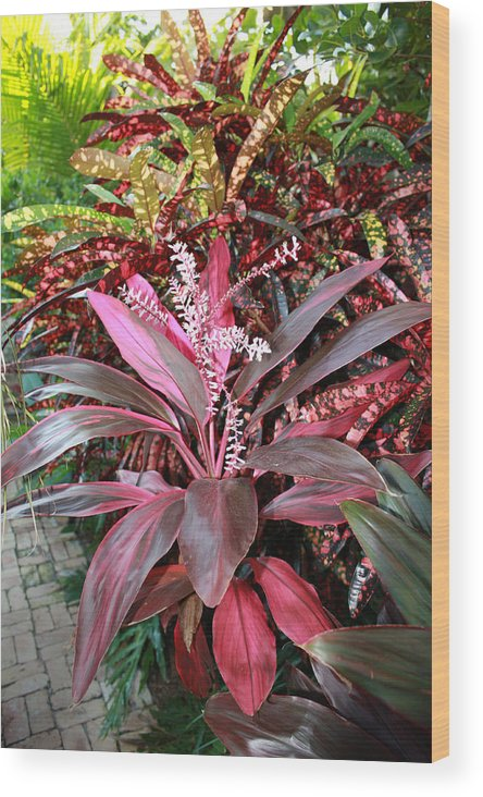 Floral Wood Print featuring the photograph Tropic Walk by Jim Derks