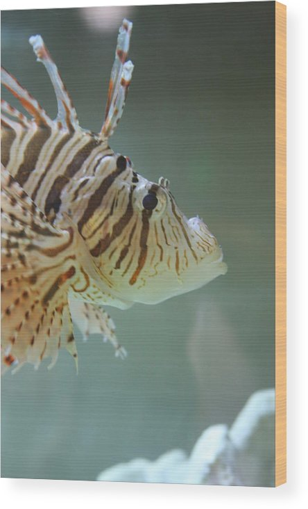 Fish Wood Print featuring the photograph Tropical Friend by Michael Lee