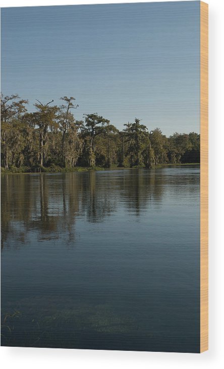Color Photograph Wood Print featuring the photograph Wakulla Springs River by Wayne Denmark