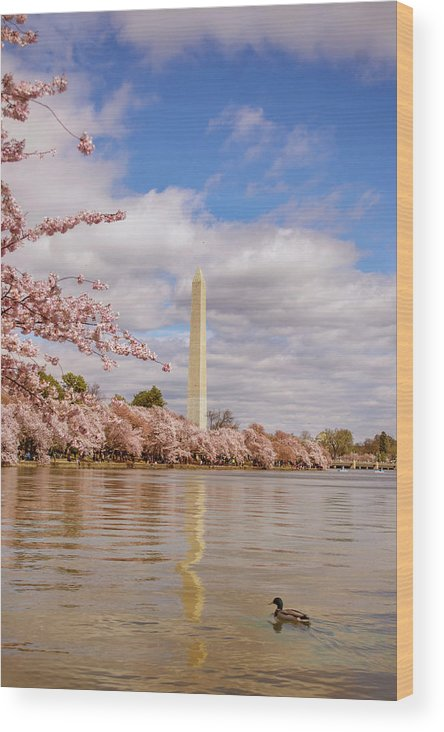 National Cherry Blossom Festival Wood Print featuring the photograph Washington Monument With Cherry Blossom by Rima Biswas