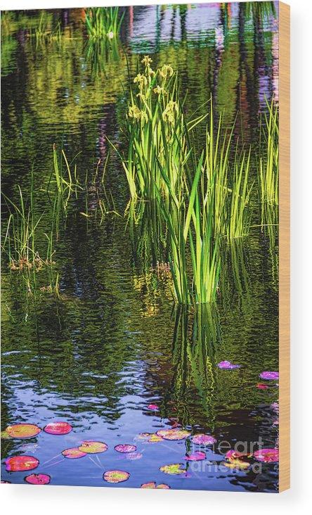 Jon Burch Wood Print featuring the photograph Water Dwellers by Jon Burch Photography