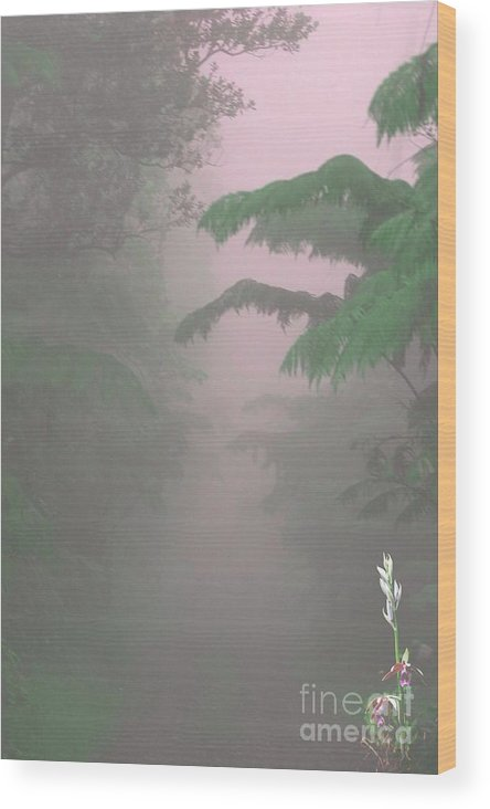 Kilauea Wood Print featuring the photograph Wild Orchid In Volcano Mist by Uldra Patty Johnson