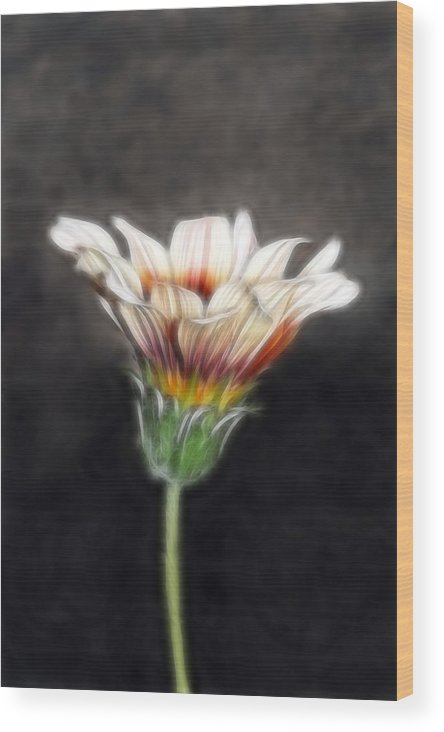 Wild Flowers Wood Print featuring the photograph Wild Petal Dreams by Lesley Smitheringale