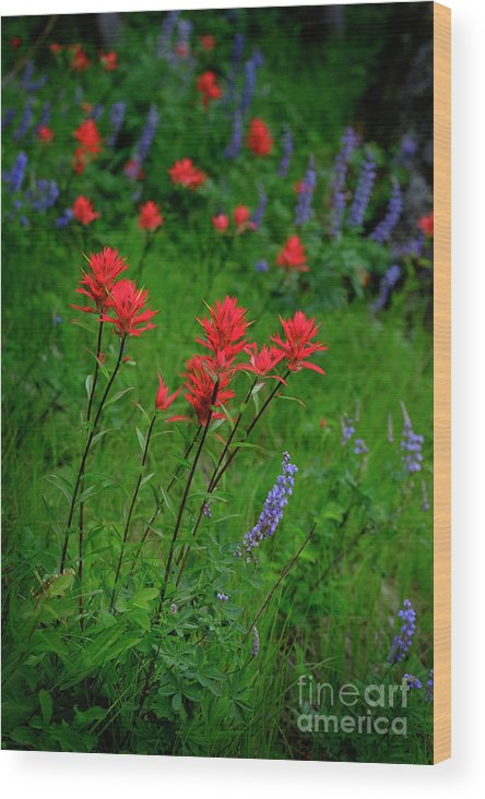 Agriculture Wood Print featuring the photograph Wildflowers In Mountains Wilderness by Lane Erickson