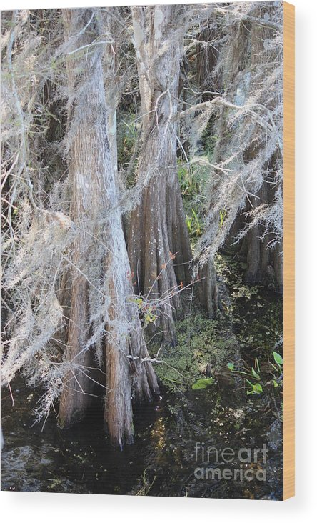 Wind Through Cypresses Wood Print featuring the photograph Wind Through The Cypress Trees by Carol Groenen