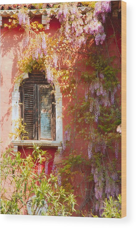 Venice Wood Print featuring the photograph Window In Venice With Wisteria by Michael Henderson