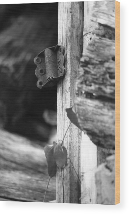 Ansel Adams Wood Print featuring the photograph Winslow Cabin Door Detail by Curtis J Neeley Jr