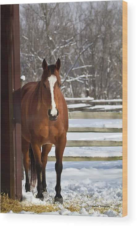 Winter Wood Print featuring the photograph Winter At The Barn by Straublund Photography