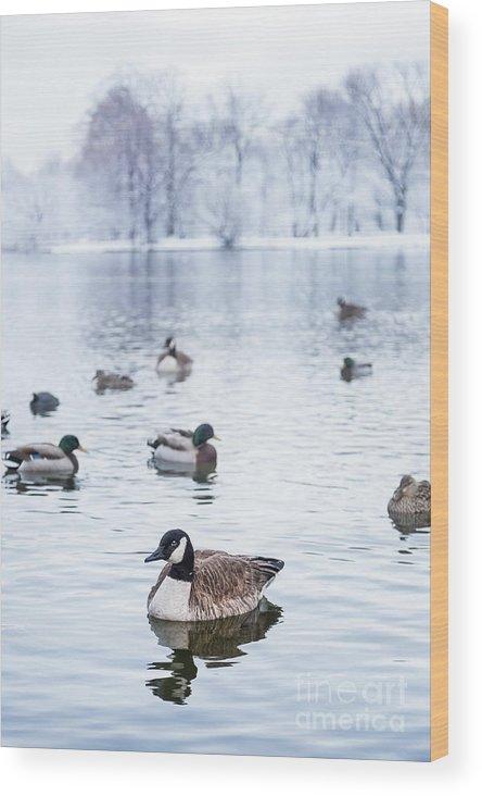 Kremsdorf Wood Print featuring the photograph Winterlong by Evelina Kremsdorf