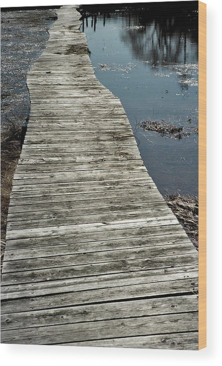 Jack Stock Wood Print featuring the photograph Wooden Wetland Path by Jack Foley
